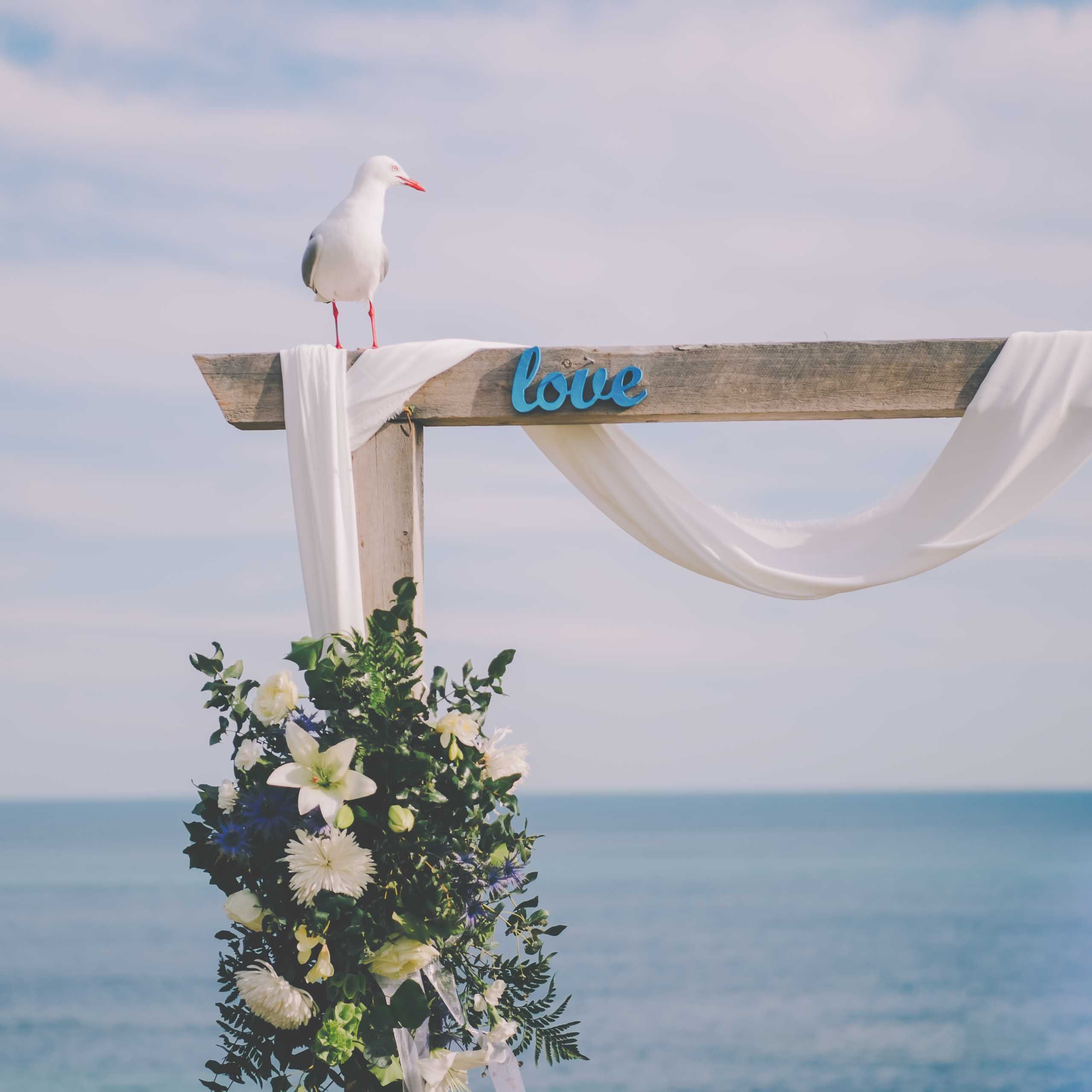 A seagull on a love arch at a Sorrento wedding